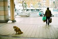 飼い主を待つ老犬 - 照片画廊
