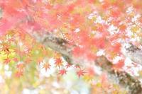 大山寺の紅葉☆ - 心 色