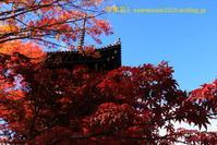 真如堂に行く2019年11月-4 - 写楽彩2