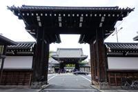 西本願寺でイチョウを見た(2019) - ほんじつのおすすめ