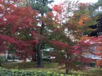 相国寺の紅葉 - 京都西陣 小さな暮らしから、田舎暮らしへぼちぼち・・・