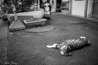 Roadside cat - SCENE