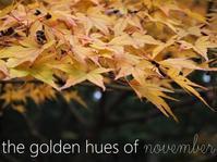 紅葉、季秋の候 - serendipity blog