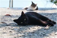 黒猫 - HIGEMASA's Moody Photo