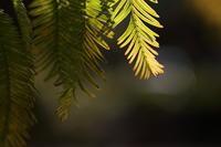 色づく公園 - ecocoro日和