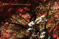 真如堂に行く2019年11月-7 - 写楽彩2