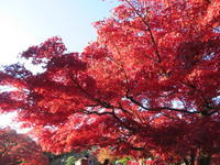 【新店】ニュー徳島ラーメン@徳島三八系 麺や 諒八 - 黒帽子日記2