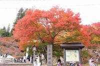 猪苗代・裏磐梯方面へ行く⑫土津神社(2019.11.3) - 風の中で~