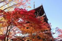 「緋色の路-真如堂から黒谷さんへー」 - ほぼ京都人の密やかな眺め Excite Blog版