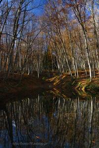 晩秋の美人林 - デジタルで見ていた風景