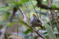 2019年の決算(ウグイス) - 野鳥などの撮影記録