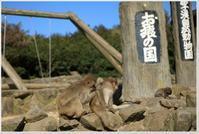 小豆島お猿の国 - ハチミツの海を渡る風の音