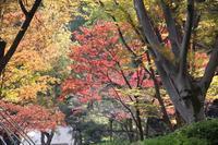 日比谷公園の菊花大会 - 子猫の迷い道Ⅱ