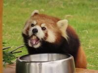 和歌山アドベンチャーワールドの旅行記を姉妹ブログ「レッサーパンダ紀行」にアップしました - (続)レッサーパンダ紀行