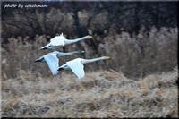 渡り鳥の嘆き - 北海道photo一撮り旅