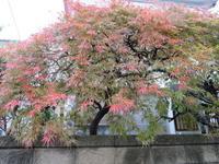 紅葉も真っ盛り名残花で楽しむ。 - 活花生活(2)