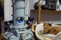 ストーブとココファーム収穫祭 - チビ猫テンコの生き方