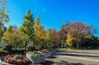 地味だけど綺麗な紅葉 - あだっちゃんの花鳥風月