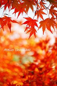 お・も・て・な・し・の秋の京都奈良旅 - Atelier Charmant のボタニカル・水彩画ライフ