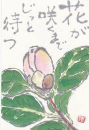 椿のつぼみ「咲いたところ見たかったな」 - ムッチャンの絵手紙日記