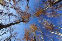 晩秋の青空 - デジタルで見ていた風景