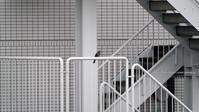 雨続きの東京で屋上でヒヨドリ撮り^^;; - Coshiのお気楽日常写真