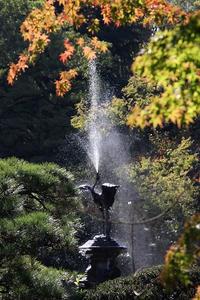 日比谷公園鶴の噴水と、ツワブキの咲く風景など - 子猫の迷い道Ⅱ