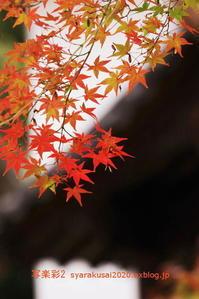真如堂に行く2019年11月-9 - 写楽彩2