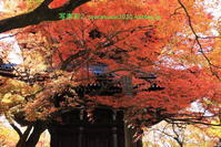 真如堂に行く2019年11月-11 - 写楽彩2