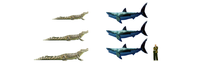 ホホジロザメとイリエワニ - アニマル情報202X