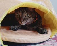 思案中 - キジトラ猫のトラちゃんダイアリー