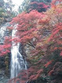 OB会・箕面の紅葉 - これから見る景色