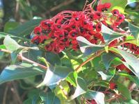 秋の実り - 里山の四季