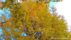 葉の色がきれい。 - 《へなまめ星人の手帖》