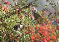 再びS園にて - 写真で綴る野鳥ごよみ