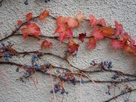 路傍の花、樹々の鳥(358)~ご近所の紅葉~ - 大屋地爵士のJAZZYな生活