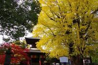 鑁阿寺の大銀杏と大きな虹 - 季節の風を追いかけて
