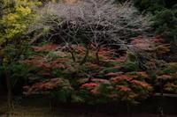 くらがり渓谷の紅葉 - ecocoro日和