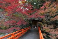 槙尾西明寺の紅葉… - ぴんぼけふぉとぶろぐ2
