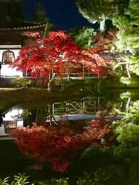 臥龍廊を背景にライトアップされる紅葉は絶景。 - ライブ インテリジェンス アカデミー(LIA)