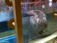 大きいね、カバさん~旭山動物園にて - My favorite ~Diary 3~