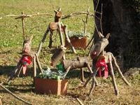 『フラワーパーク江南にクリスマス飾りが・・・・・』 - 自然風の自然風だより