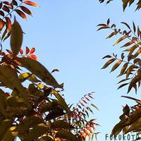 小さな庭でも自然は一様に訪れて「まだまだ子どもの木々も秋色に色づいて!」編 - ドライフラワーギャラリー⁂ふくことカフェ