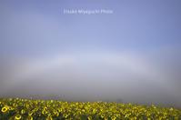 白虹の贈り物 - ekkoの --- four seasons --- 北海道