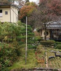 お庭の雪吊 - 金沢犀川温泉 川端の湯宿「滝亭」BLOG