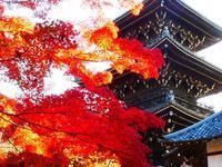紅葉の京都へ①('ω') - ほっこりしましょ。。