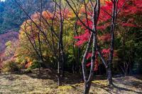 三重県松阪 - toshi の ならはまほろば