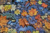 竜門峡の紅葉-2 - 自然と仲良くなれたらいいな2