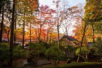 箱根長安寺の紅葉2019 - エーデルワイスPhoto