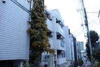 渋谷区本町界隈街散策して? - 一場の写真 / 足立区リフォーム館・頑張る会社ブログ